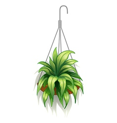 A hanging pot with green plants vector image vector image