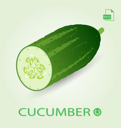 Half of fresh ripe cucumber vector