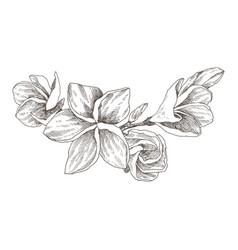 Hand drawn sketch tropical flower plumeria vector