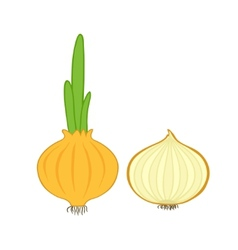 onion and slice vector image