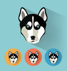 husky portrait with flat design vector image vector image