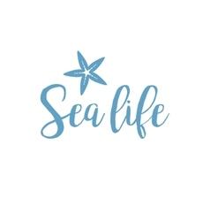 Starfish sea life lettering design vector image vector image