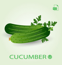two fresh ripe cucumbers with leaves vector image