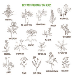 Best anti-inflammatory herbs set vector