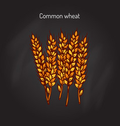 Hand drawn wheat ears sketch vector