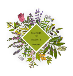 Herbs power for natural beauty vector