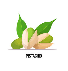 pistachio with leaves isolated on white background vector image