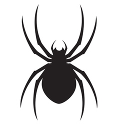 Spider design vector