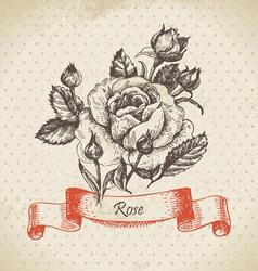 Rose hand drawn vintage design vector