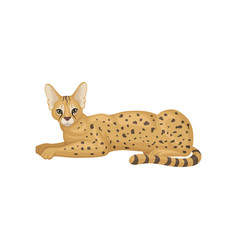 serval lying on floor side view wild cat with vector image