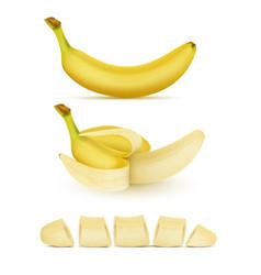 Set of yellow bananas sweet tropical fruit vector