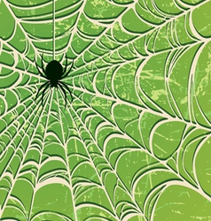 spider on a web two vector image