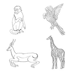 set of animals parrot vector image vector image