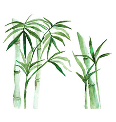 watercolor bamboo vector image vector image