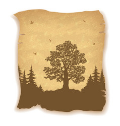 landscape oak tree firs and birds vector image