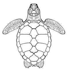 sea turtle hand drawn vector image