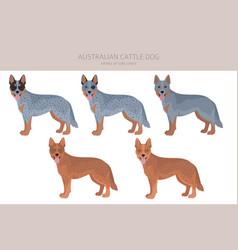 Australian cattle dog all colours clipart vector
