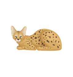flat design of sleeping african serval vector image