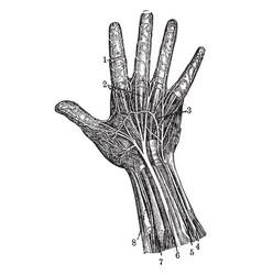 Hand vintage vector