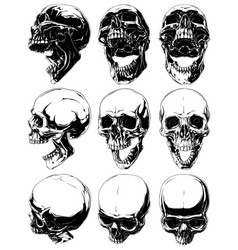 realistic cool detailed graphic skulls set vector image vector image