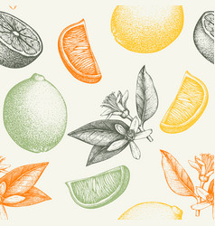 ink hand drawn lime background vector image