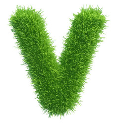 small grass letter v on white background vector image vector image