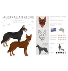 Australian kelpie all colours clipart different vector