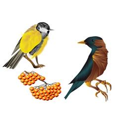 birds and berries vector image