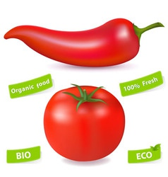 Chili pepper and tomato vector