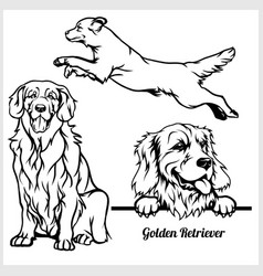 golden retriever - for t-shirt vector image