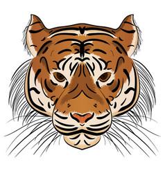 head ferocious tiger vector image
