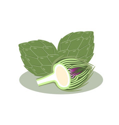 Artichoke isolated on white background vector
