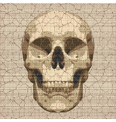 cracked canvas skull vector image