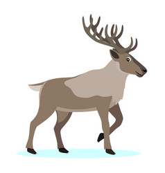 cute forest polar animal cartoon caribou reindeer vector image