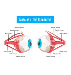 Human eye anatomy diagram vector