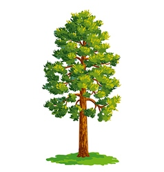 Pine tree vector image