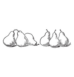 Six pears vintage vector