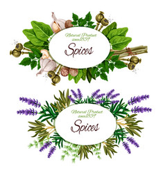 spice herbs and food seasoning vector image