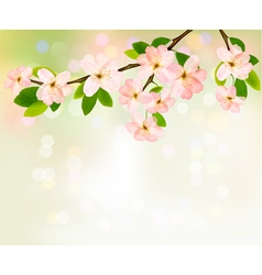Spring background with blossoming tree brunch with vector