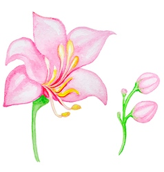 Watercolor pink tropical flower vector