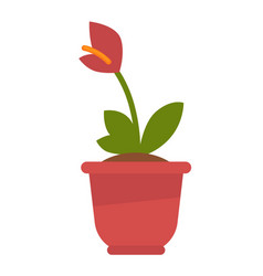 calla plant in flowerpot isolated on white vector image