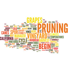 the annual life cycle of california vineyards vector image