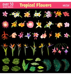 Tropical Flowers Design Elements Set vector