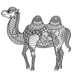 camel coloring book vector image vector image