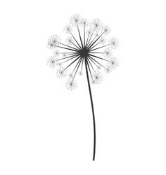 dandelion seed decoration icon vector image vector image