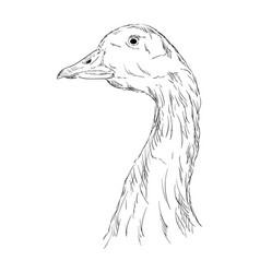 A goose head vector