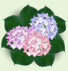 Hydrangea watercolor flowers greeting card vector