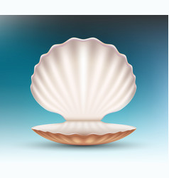 Open empty seashell mockup vector
