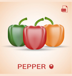 Set of three fresh sweet peppers green red and vector
