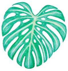 Watercolor green leaf vector